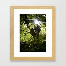 Leaf Light Framed Art Print