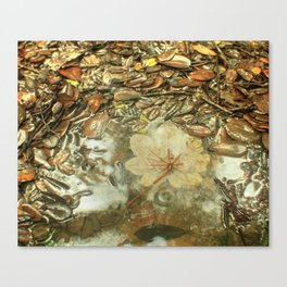 On the Tradewinds trail we find this (white side) Yagrumo tree leaf - El Yunque rain forest Canvas Print