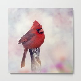 Male Northern Cardinal perches on a stump Metal Print