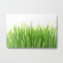 liaves rice Metal Print
