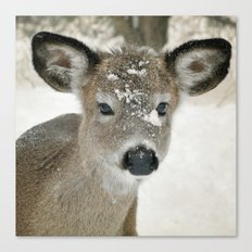 Snow Baby Canvas Print