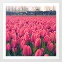 Tulips Field #5 by julianarw