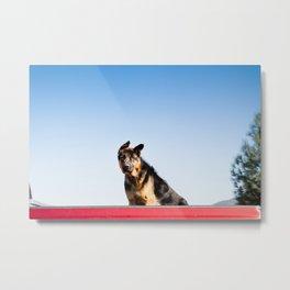 Dog Eared Metal Print