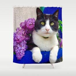 Orazio charming cat in the blue Shower Curtain