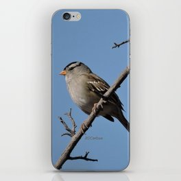 A White-Crowned Sparrow Eyes the Botanic Garden iPhone Skin