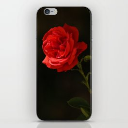 The wild red rose iPhone Skin