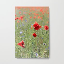poppy flower no8 Metal Print