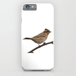 Rustic Bunting Bird Vector Isolated iPhone Case