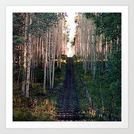 Aspen Trail Art Print