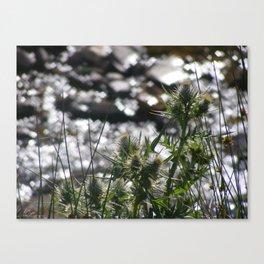 Spring Thistles Canvas Print