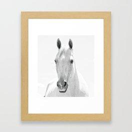 White Horse Photograph Framed Art Print