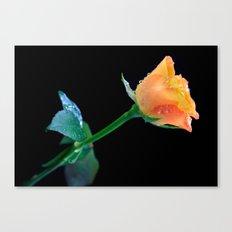 Thanksgiving Rose Canvas Print
