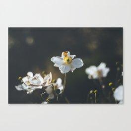 Anemone flowers Canvas Print