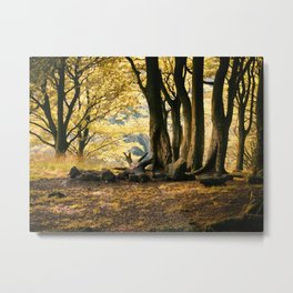 autumn forest - valley morning Metal Print