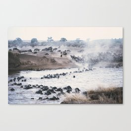 Ñu migration Canvas Print