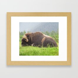 Musky Ox Framed Art Print
