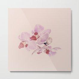 Matte Pink Orchid Flower Metal Print