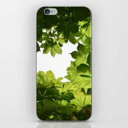 Buckeye Canopy iPhone Skin