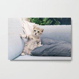 Baby Cat Art Print Metal Print
