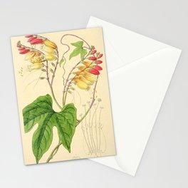 Flower 024 mina lobata Lobe leaved Mina26 Stationery Cards