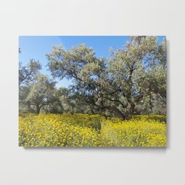 The Old Olive Grove 2 Metal Print