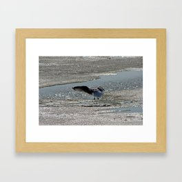 Seagull fishing on the icy Mississippi River Framed Art Print