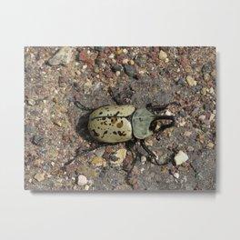Rhino Beetle Metal Print