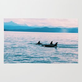 Orcas Swimming Through the Evening Rug