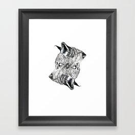 Canis latrans Framed Art Print