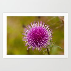 Thistle flower 6389 Art Print