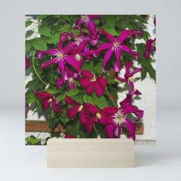 Clematis viticella Mme Julia Correvon Mini Art Print