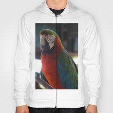 Parrot Talk Hoody