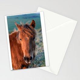 Pony Stationery Cards