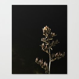 Contrast at Night Canvas Print