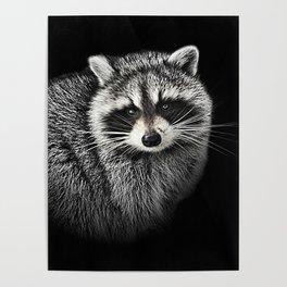A Gentle Raccoon Poster