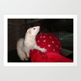 The Ivory Ferret and the Starry Red Bouncy House Art Print