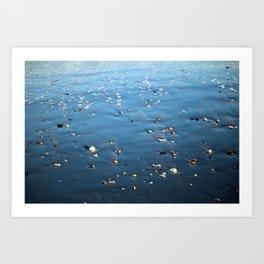 Seashells On The Shore Art Print