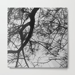 Bare Tree Branches First Flowers Metal Print