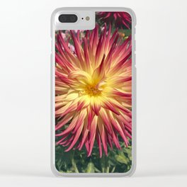 Dahlia In The Garden / 43 Clear iPhone Case