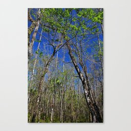 Withering Hour Canvas Print