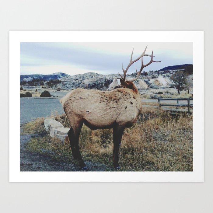 Mammoth Elk Kunstdrucke