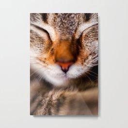 Peaceful Kitten Nap Metal Print