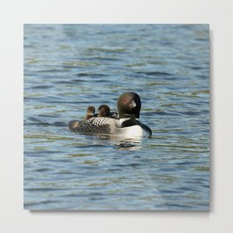 Mother loon the life preserver  Metal Print