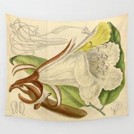 Baikiaea insignis, Fabaceae, Caesalpinioideae 1919 Wall Tapestry