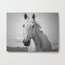 Black and White Horse Photograph Metal Print