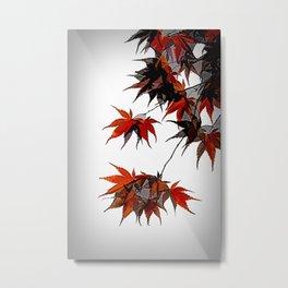Acer Tree Leaves Metal Print