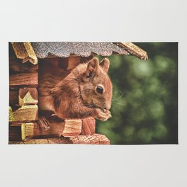 Foraging Squirrel in Little House Rug