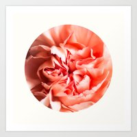 In the middle of a peony Art Print