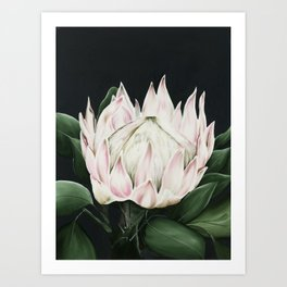 Protea Flower in Shades of Pink and green Art Print