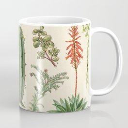 Cactus Vintage Scientific Illustration Encyclopedia Labeled Diagrams Coffee Mug